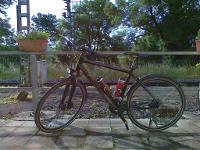 Winora Samoa Crossrad